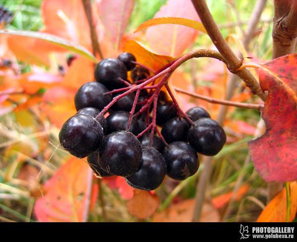 Blackfruit