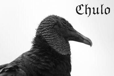Chulo1