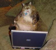 Edloe laptop