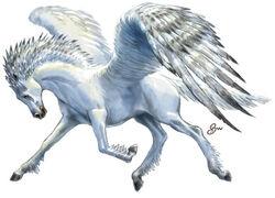 Pegasus.jpeg