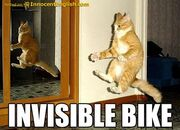 Funny-cat-riding-a-bike