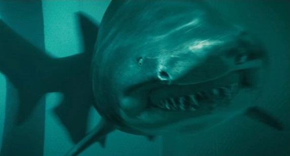 Tiger Shark | Shark Night 3D Wiki | Fandom powered by Wikia