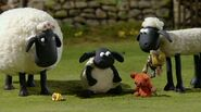 Timmy | Shaun the Sheep Wiki | Fandom powered by Wikia