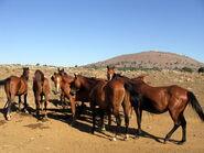 סוסים ליד הבנטל