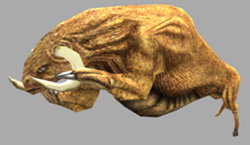 Sirian werebull