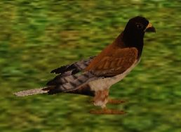 File:Falcon.png