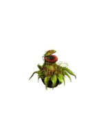 File:Mutant Plant TS1.png