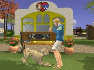 Town Square - playing with dog