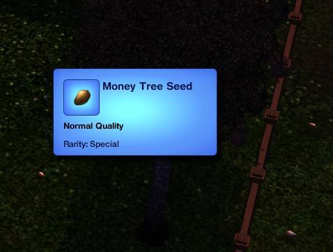 File:Money tree seed.JPG