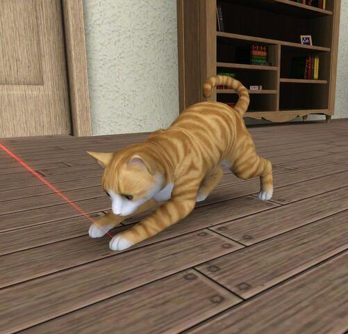 File:Maya Mae the cat.jpg