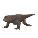 File:Pygmy Komodo Dragon.png