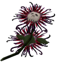File:Death Flower Large.png