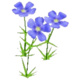 Wildflower Blue Flax
