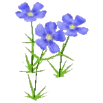 File:Wildflower Blue Flax.png