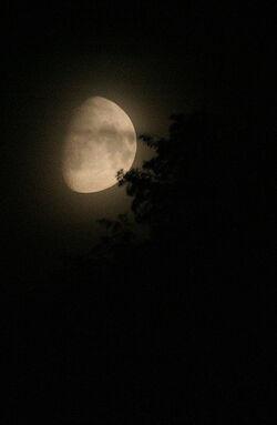 Nightmoon