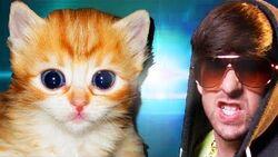 Cute Furry Kittens