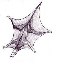 Batweasel
