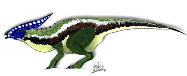Chlorosaurus ornatissimus.jpg