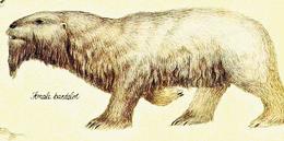 Bardelot female
