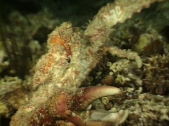 File:Case of the Sponge Bob 086.png