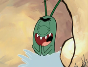 Plankton In Ear Wax