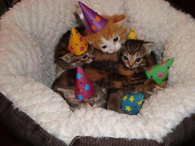 Kittens Wearing Party Hats Party Hat Kittens