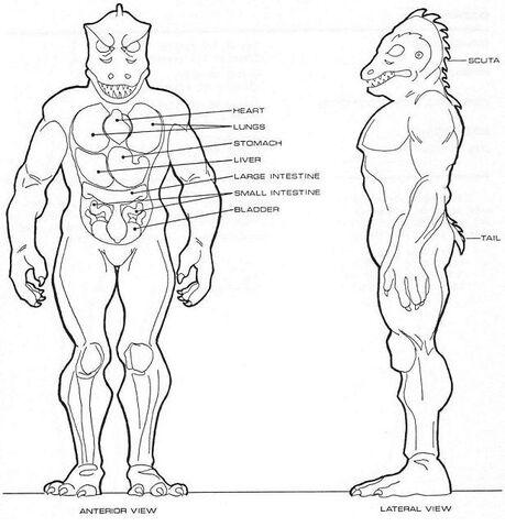 File:Homo lacertae physiology.jpg