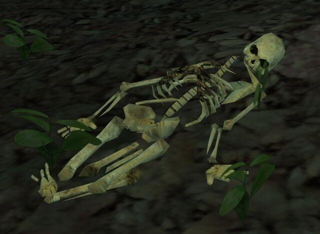 File:Jonna skeleton.jpg