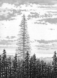 Endor Father Tree