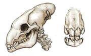 Utai Skull