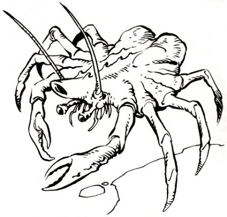 File:NeedlerCrab.jpg