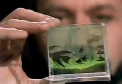Pocket-sized aquarium