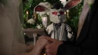 White Rabbit OW113