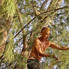 Tai climbing up a tree.
