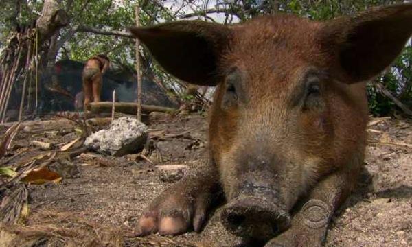 File:Pig ep11.jpg