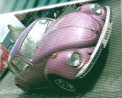 File:Purple beetle.jpg