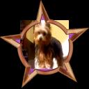 File:Badge-2280-2.png