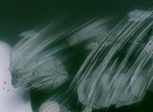Cell snaps Piccolo's neck