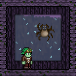 Spider Pet Wall