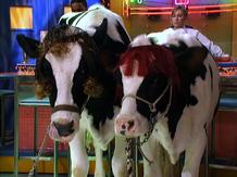 Cow tongue