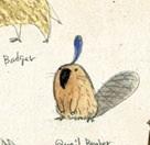 Quailbeaver