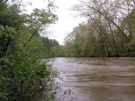 Cowpasture River scene