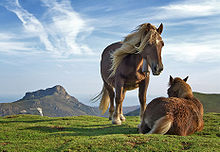 File:Horses.jpg