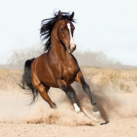 File:Beautiful-horses-horses-17306122-650-650.jpg