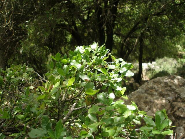 File:Mediterranean forests 1.jpg