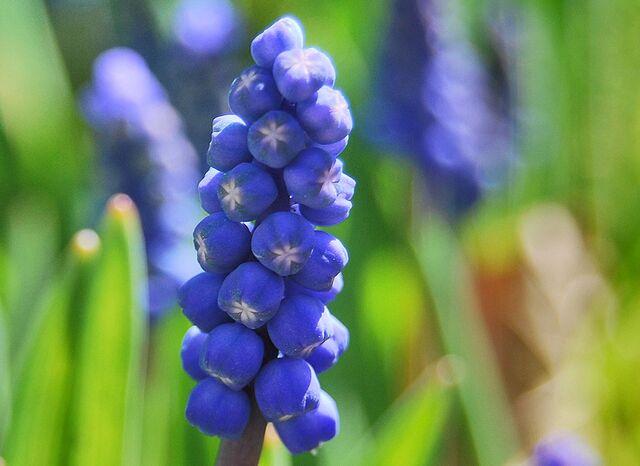 File:10 04 flowers8.jpg