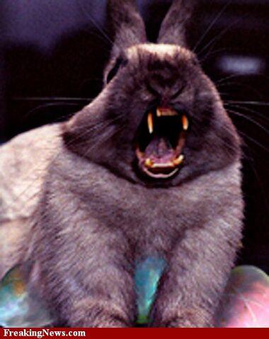 File:Rabbit mutt.jpg