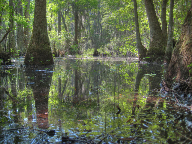 File:Swamp by Mike Love.jpg