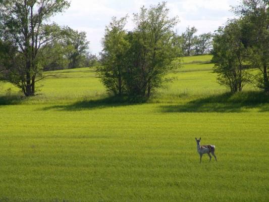 File:Hert-in-open-vlakte-30816.jpg