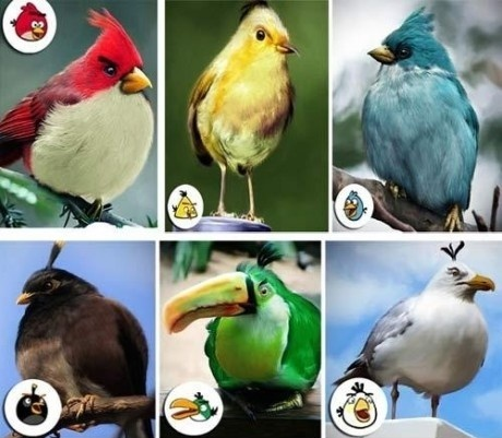 File:Real angry birds.jpg